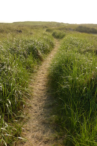 Trail to the beach