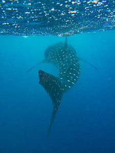 maldives17-014