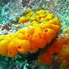 Yellow calcite sponge 3032