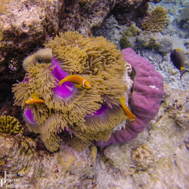 IMAGE: http://www.jasonpeacottphotography.com/Travel/Maldives/Underwater/i-6B9hwCc/0/XL/G0112525-XL.jpg