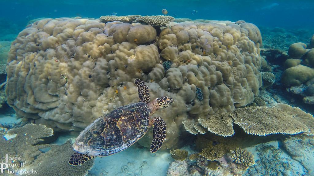 IMAGE: http://www.jasonpeacottphotography.com/Travel/Maldives/Underwater/i-K3t4TTF/0/XL/G0272858-XL.jpg