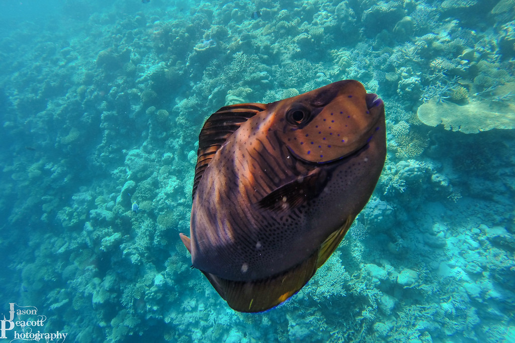 IMAGE: http://www.jasonpeacottphotography.com/Travel/Maldives/Underwater/i-Z5zppGG/0/XL/G0042032-XL.jpg