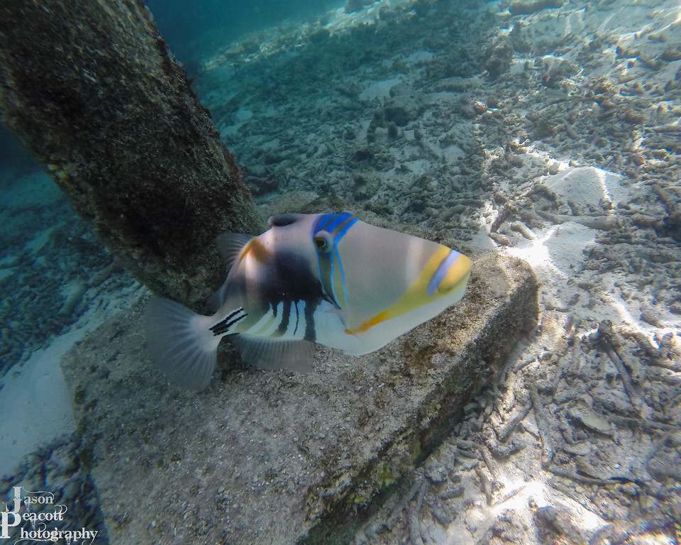 IMAGE: http://www.jasonpeacottphotography.com/Travel/Maldives/Underwater/i-h6NwtrG/0/XL/G0161326-XL.jpg