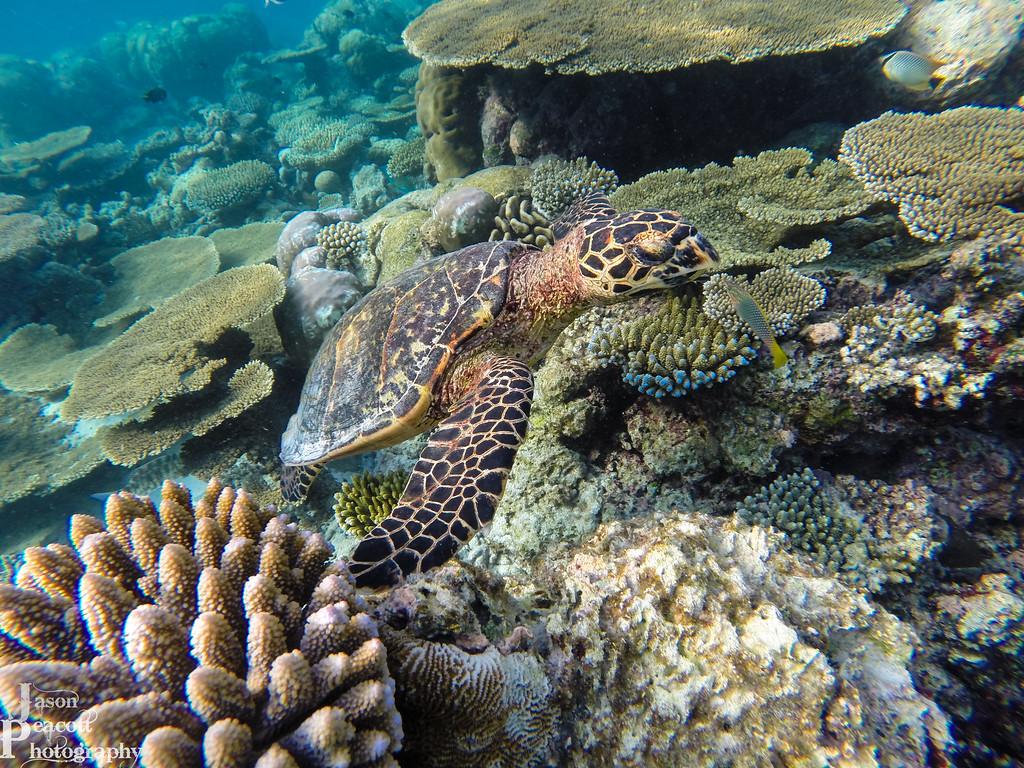IMAGE: http://www.jasonpeacottphotography.com/Travel/Maldives/Underwater/i-zFSP9Sh/0/XL/G0282942-XL.jpg