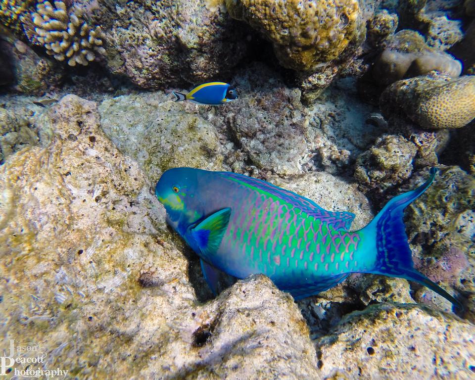 IMAGE: http://www.jasonpeacottphotography.com/Travel/Maldives/Underwater/i-zFT62bB/0/XL/G0051901-XL.jpg