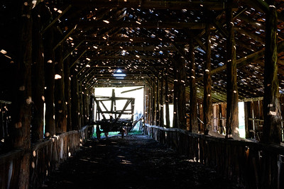 Hay wagon inside the dappled Long Barn