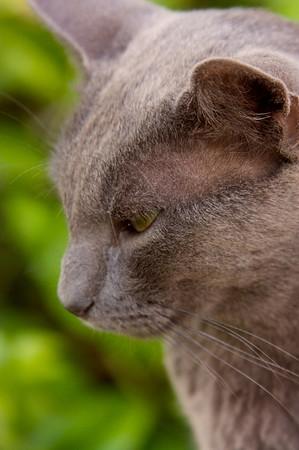 Solemn cat, Deia