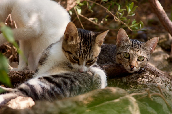 Some of the villa's feral cats
