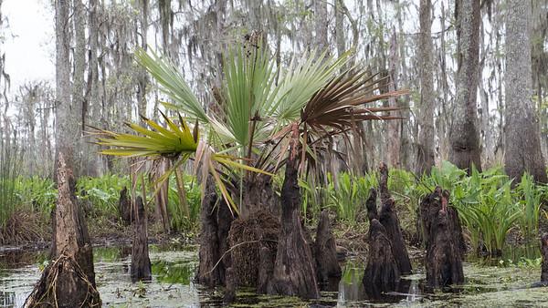 ManchacSwamp-6918