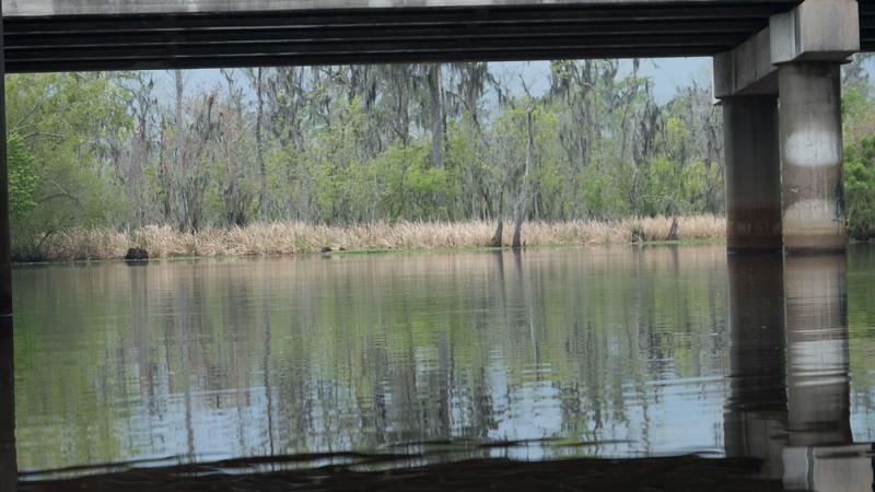 ManchacSwamp-6879