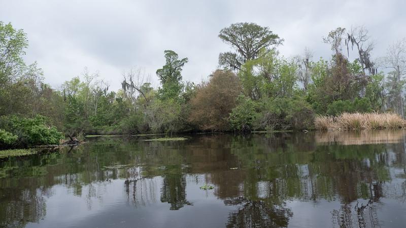 ManchacSwamp-6904