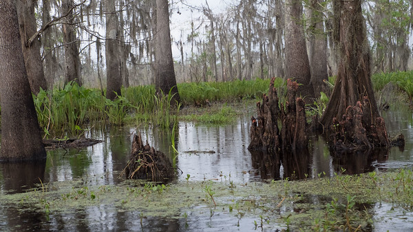 ManchacSwamp-6942