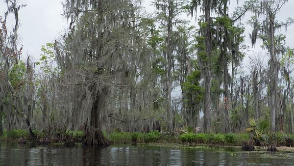 ManchacSwamp-6908