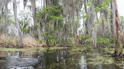 ManchacSwamp-6913