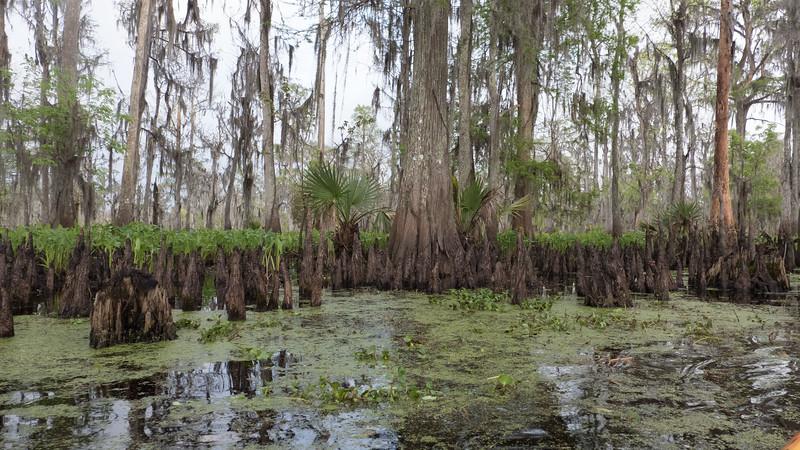 ManchacSwamp-6945