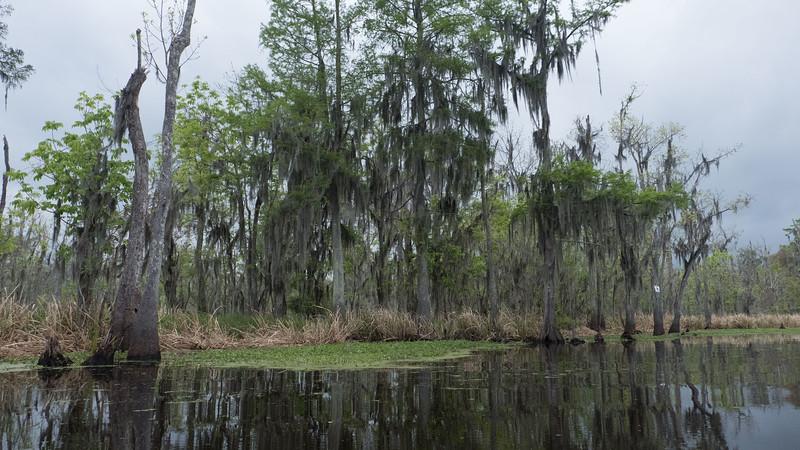 ManchacSwamp-6901