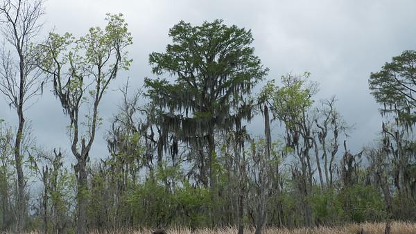 ManchacSwamp-6894