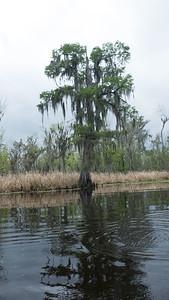 ManchacSwamp-6898