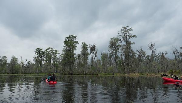 ManchacSwamp-6906