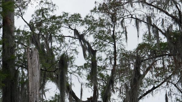 ManchacSwamp-6934