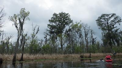 ManchacSwamp-6896