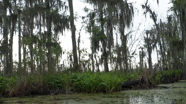 ManchacSwamp-6921