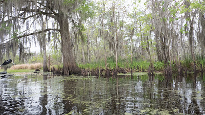 ManchacSwamp-6915