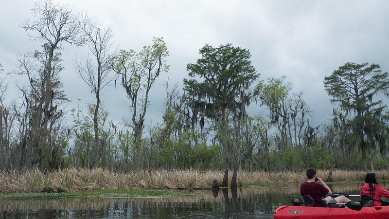 ManchacSwamp-6895
