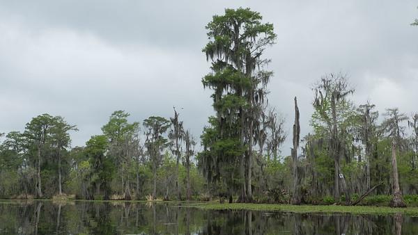 ManchacSwamp-6910