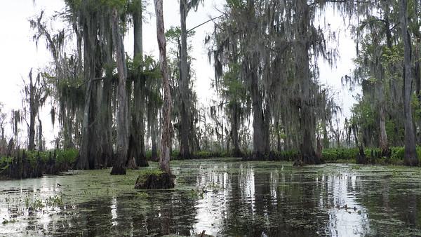 ManchacSwamp-6928