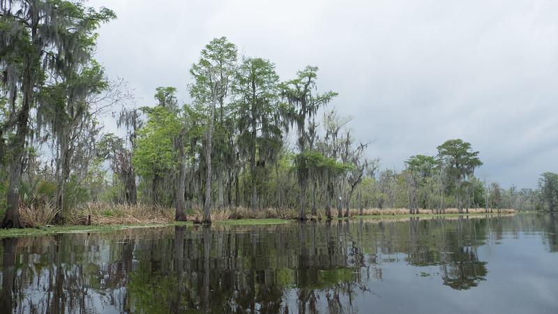 ManchacSwamp-6899