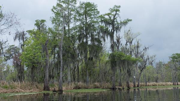 ManchacSwamp-6900