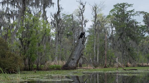 ManchacSwamp-6907