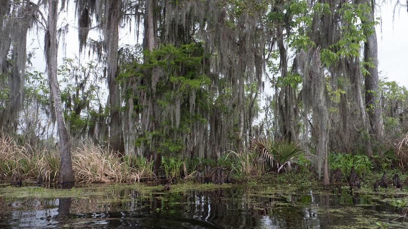 ManchacSwamp-6914
