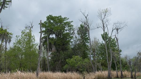 ManchacSwamp-6903
