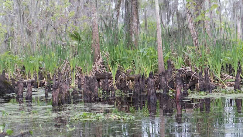 ManchacSwamp-6916