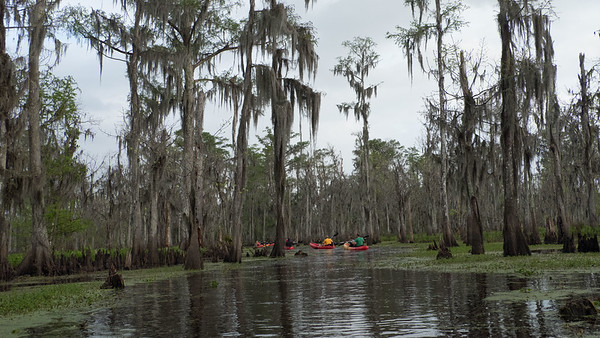 ManchacSwamp-6943