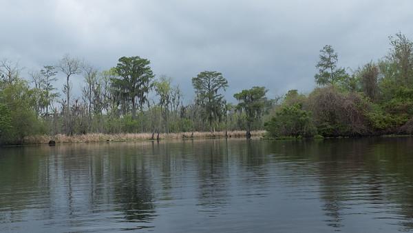 ManchacSwamp-6893