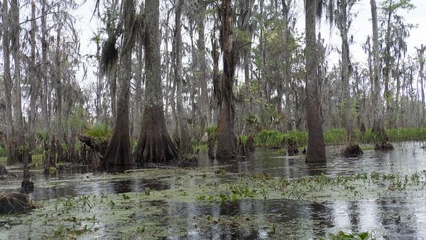 ManchacSwamp-6919