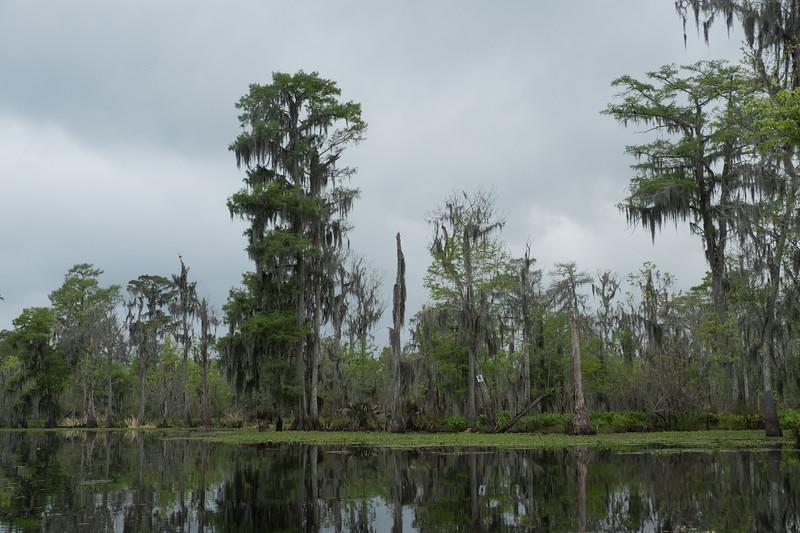 ManchacSwamp-6912