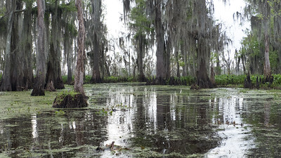 ManchacSwamp-6927