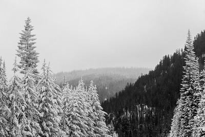 Manning Park Snowshoeing