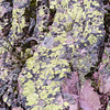 Liking the colorful lichens