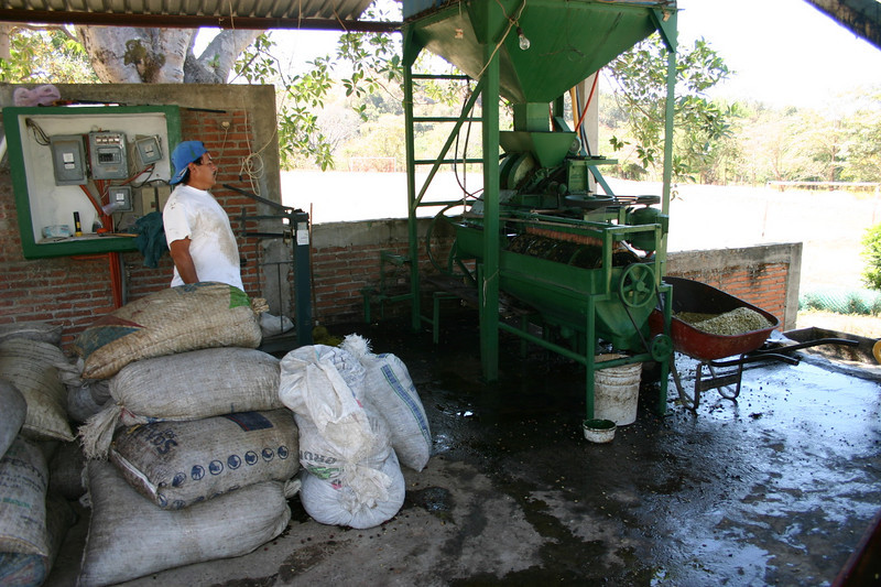 "We next went to the coffee ""factory.""  I use the word ""factory"" loosely because shelling and drying the coffee beans is not a very sophisticated process."