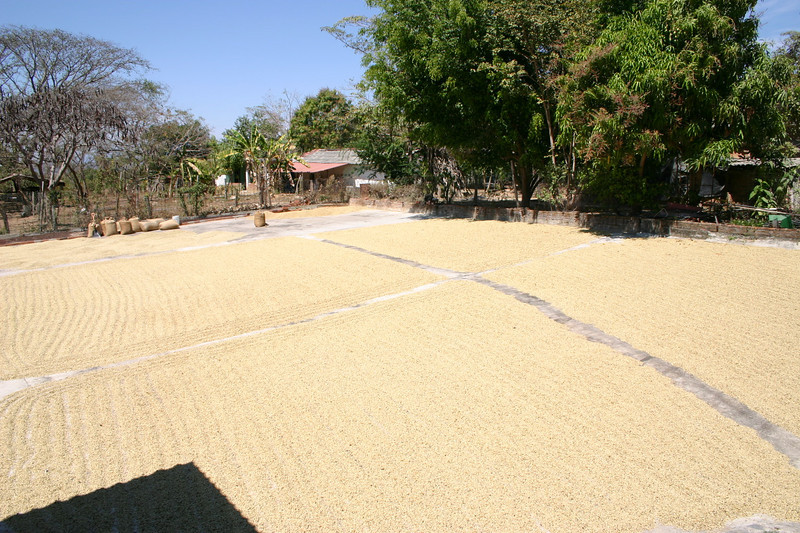 The beans are then spread out in this court yard to dry.  And other than roasting the coffee that is about all there is to it.