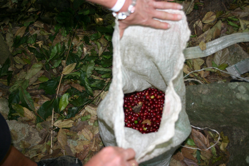She filled two 120 pound bags of beans each day, by manually picking the beans.  That is a ton of coffee beans.  For this, she earned $20.