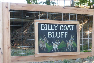 See the billy goat in the top left (second square from the left)