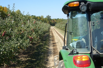 Riding through the apple orchards. (Jonagold apples to the left, Red delicious to the right)