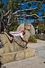 Jeff Loving the Inca Stone Gods - Palm Beach Zoo