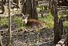 Sleeping in the Cypress Knees - Manatee Springs State Park, Florida